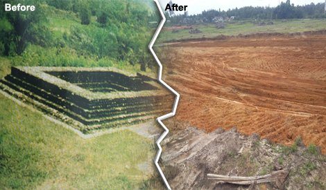 candi-11-before-after-demolished-image-from-says-com_