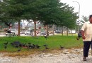 Feeding Tne Crows
