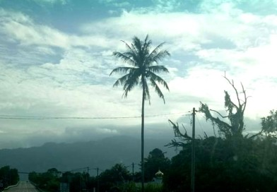 A Palm's Good Morning Wave